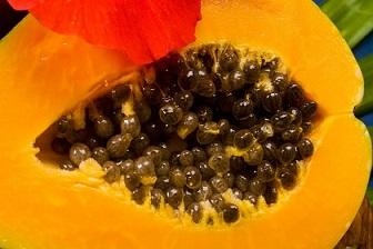 Bài thuốc từ hạt đu đủ trị 'dứt điểm' bệnh thấp khớp