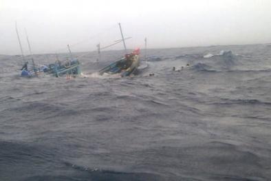 Trung Quốc đâm chìm tàu cá của ngư dân Quảng Ngãi: Cực lực phản đối