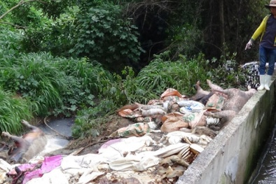 Kinh hoàng xác lợn chết 'ngụp lặn' trên sông Sài Gòn