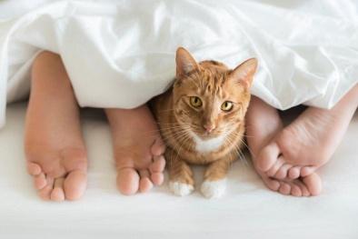 Chết đứng nhìn cuộn lông mèo 5 cm trong 'vùng kín' bệnh nhân