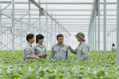Vingroup bắt tay 1.000 HTX, hộ nông dân cung ứng nông sản sạch