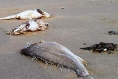 Tin tức mới nhất về chất lượng hải sản 4 tỉnh miền Trung