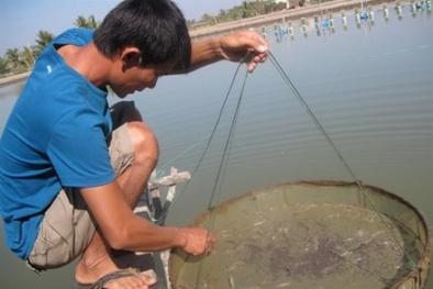 Nhập khẩu kháng sinh thú y, thủy sản dùng sai mục đích sẽ bị 'trảm'