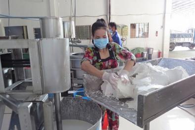 Làng nghề làm bột Đồng Tháp đầu tư máy móc nâng cao năng suất