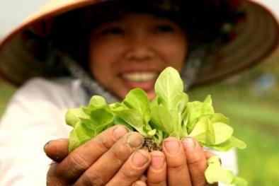 Rau hữu cơ đắt gấp 4 lần rau chợ người dân vẫn 'cắn răng' mua vì sức khỏe