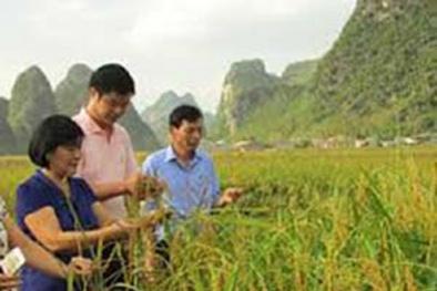 Cao Bằng: Thành công liên kết bốn nhà trong sản xuất và tiêu thụ nông sản