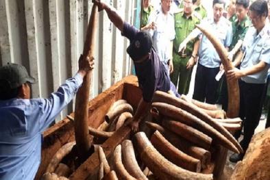 Triệt phá các đường dây mua, bán động vật hoang dã