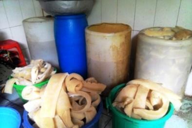 Tiêu hủy gần nửa tấn bì lợn và tóp mỡ không đảm bảo