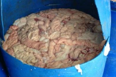 Phát hiện nửa tấn lòng lợn thối, đã bốc mùi trong thùng xe tải ở Bình Dương