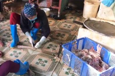 'Nhập kho' gần 1 tấn nội tạng động vật đang mốc xanh chờ Tết bán