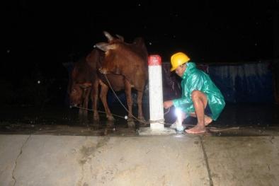Lũ lụt miền Trung: Xót xa nhìn người dân Quảng Nam chạy lũ trong đêm