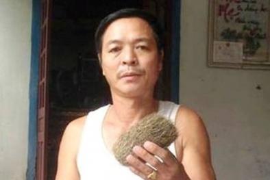 Số phận 'hẩm hiu' của cát lợn quý hiếm 3 tỷ đồng không bán ở Nghệ An