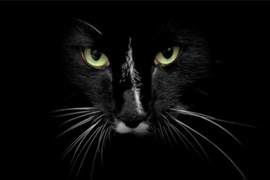 Khoa học giải thích chuyện xác chết 'sống lại' khi mèo nhảy qua