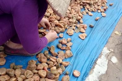 'Phù phép' trái cây thối thành hàng tấn ô mai tiêu thụ dịp tết