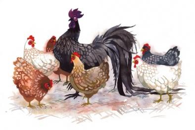 Năm Dậu có nên cúng gà không?