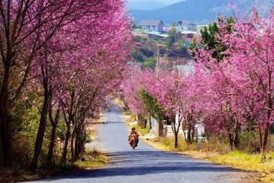 4 điểm đến hấp dẫn cho chuyến du xuân đầu năm