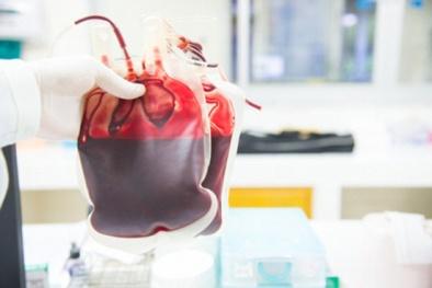 Máu nhân tạo giúp cứu sống người bệnh như máu thật