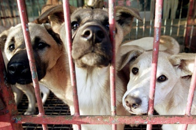 Bên trong chợ thịt chó lớn nhất Hàn Quốc vừa đóng cửa