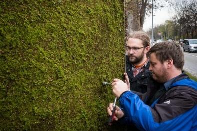 Chống ô nhiễm không khí 'xưa nay hiếm' bằng cách xây tường rêu