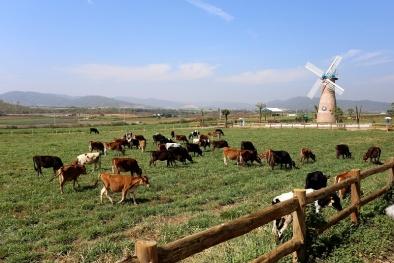 Vinamilk chính thức khánh thành trang trại bò sữa Organic đầu tiên tại Việt Nam