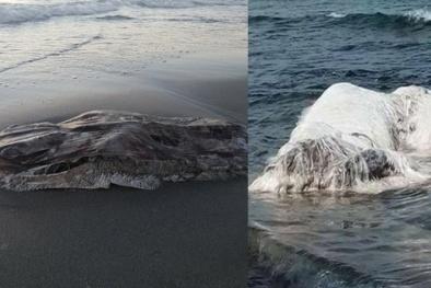 Bí ẩn những 'quái vật' khổng lồ, kỳ dị trôi dạt vào bờ biển