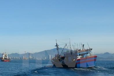 Danh tính 9 thành viên tàu Hải Thành 26 mất tích