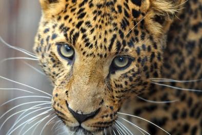 Điểm mặt những loài vật có nguy cơ 'biến mất' khỏi Trái đất