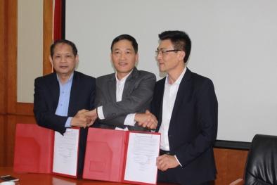 Hợp tác và phát triển bò Mông thành 'bò Kobe Việt Nam'