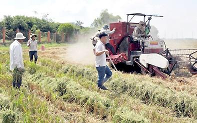 Sáng tạo máy gặt lúa lùa chuột vào bẫy ở Đồng Tháp Mười