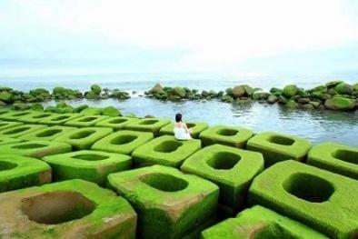 Thảm rêu xanh - địa điểm du lịch mới ở Phú Yên hấp dẫn du khách