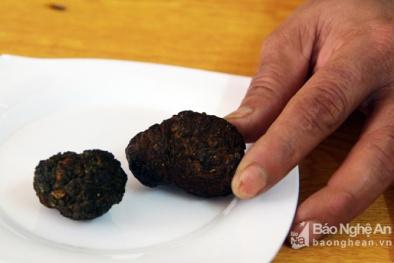 Nghệ An: Phát hiện vật thể lạ trong bụng dê, đại gia trả trăm triệu không bán