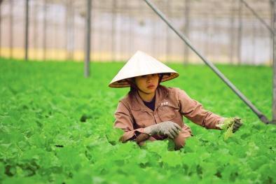 Đà Nẵng quy hoạch 7 vùng sản xuất, ứng dụng nông nghiệp công nghệ cao