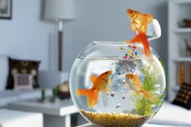 Nuôi cá trong bình thủy tinh mini tuyệt đẹp đặt ở bất cứ đâu