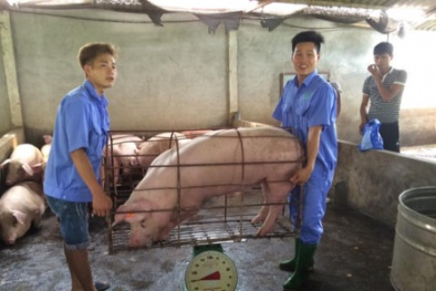 'Giải cứu' thịt lợn: Bộ NN&PTNT lên tiếng