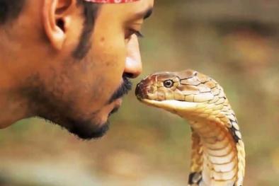 Vì sao 'vũ khí giết người' của loài rắn quý hơn vàng?