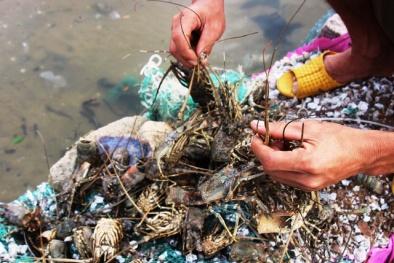 Phú Yên: Hơn 500.000 con tôm hùm bị chết, người dân trắng tay sau một đêm