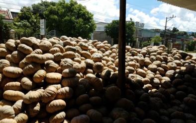 Đắk Lắk: Bí ngô 500 đồng/kg, nông dân khóc ròng