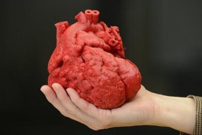 Giải mã tại sao con người hầu như không bị ung thư tim