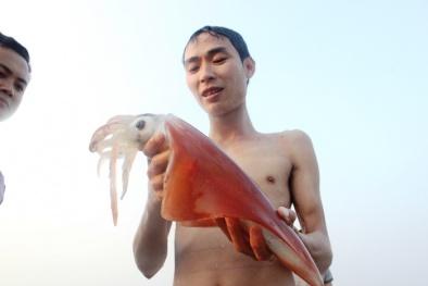 Sắp công bố kết quả chất lượng hải sản tầng đáy ở vùng biển 4 tỉnh miền Trung
