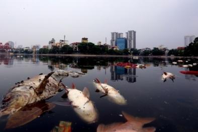 Cá chết hồ Hoàng Cầu: Điểm trùng hợp khó tin