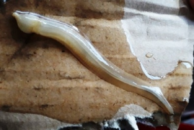 Kỳ lạ: Sinh vật sống dưới đáy biển xuất hiện làm cá chết hàng loạt ở Hòn Chuối?