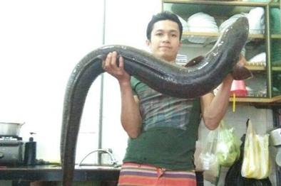 Nghệ An: Cá lệch 'khủng' dài gần 2m, nặng 15 kg mắc câu ngư dân