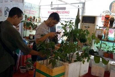 Dân Quảng Nam thu 12,5 tỷ đồng từ hội chợ sâm Ngọc Linh