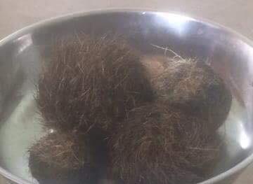 Nghệ An: Mổ lợn nái, phát hiện 4 vật lạ nghi cát lợn tiền tỷ