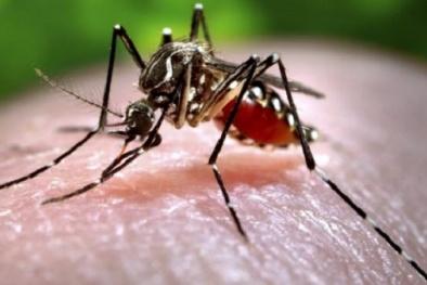 Bác sĩ hướng dẫn cách ăn uống hợp lý khi mắc bệnh sốt xuất huyết