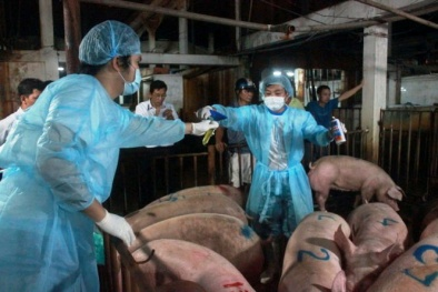 Bộ Nông nghiệp: 'Không phát hiện chất cấm Salbutamol trong thịt kiểm nghiệm'