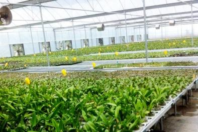 Hà Nội: Chú trọng ứng dụng công nghệ cao trong nông nghiệp