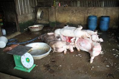 """Hà Nội: Thịt lợn không dấu kiểm dịch, không nguồn gốc vẫn 'tung hoành"""""""