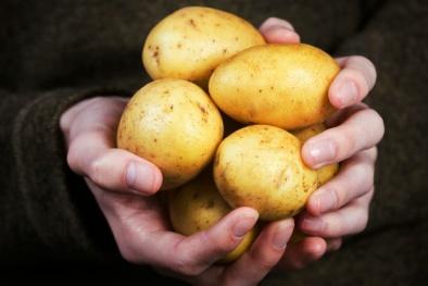 Bảo quản khoai tây trong tủ lạnh chẳng khác nào thêm độc vào người