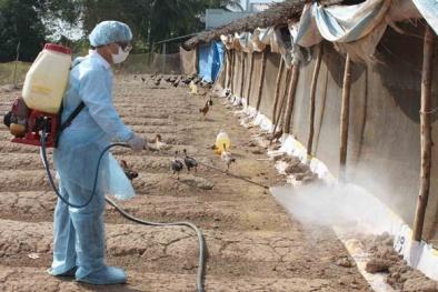 Cảnh báo: Virus cúm gia cầm có thể xâm nhập Việt Nam bất cứ lúc nào